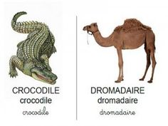 Vocabulaire les animaux des pays chauds Dear Zoo, Pre Kindergarten, Busy Bags, Zoo Animals, Wild Animals, Camel, Safari, Science, Activities