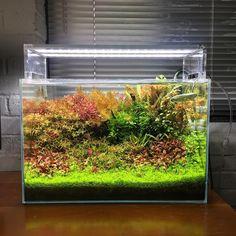 753 отметок «Нравится», 25 комментариев — @shrimpery в Instagram: «I just got an inline heater for this one since it's freezing #aquarium #aquascape #aquascaping…»