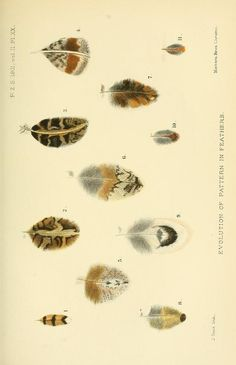Proceedings of the Zoological Society of London, 1901, V.2 (May-Dec.).