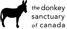 Sponsoring a donkey, mule, or hinny here at the Donkey Sanctuary of Canada will help to provide support for animals here at the Sanctuary. Funny Donkey Pictures, A Donkey, Miniature Donkey, Cattle Farming, Months In A Year, People Like, Ontario, Activities For Kids, Bucket