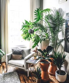 Most Popular Indoor Hanging Plants . Most Popular Indoor Hanging Plants . Diy Hanging Plant Wall with Macrame Planters Indoor Bamboo Plant, Tall Indoor Plants, Indoor Tropical Plants, Indoor Palms, Porch Plants, Indoor Flowering Plants, Indoor Flowers, Hanging Plants, House Plants