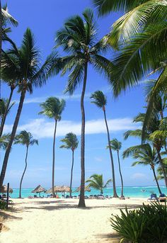 Beach Scene  | Dominican All Inclusive Resorts - Punta Cana | View Package Deals up to 60% Off!