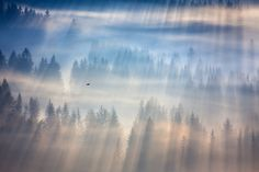 Morning raven by Marcin Sobas on 500px
