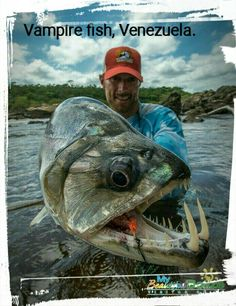 Vampire Fish caught by Will Flack in Venezuela. Vampire Fish caught by Will Flack in Venezuela. Deep Sea Fishing, Gone Fishing, Fishing Shop, Scary Animals, Animals And Pets, Trout Fishing, Kayak Fishing, Fishing Tips, Fishing Tackle