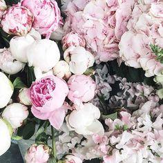 #Flowers ❁ Pinterest: @beatrizmey