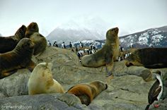 Argentina #unafotoalgiorno Ushuaia canale Beagles