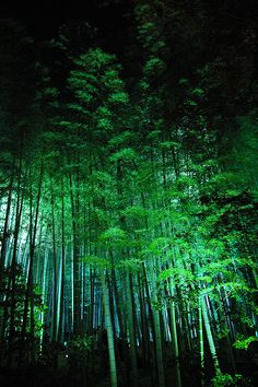 Bamboo forest in Kyoto, Japan by hinjuku