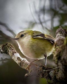 Nature Photography, Birds, Animals, Animales, Animaux, Nature Pictures, Bird, Animal, Animais