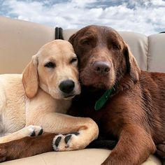 e'll weather this storm together ? Cute Funny Animals, Cute Baby Animals, Animals And Pets, Lab Puppies, Cute Puppies, Cute Dogs, Labrador Noir, Dog Rules, Mundo Animal