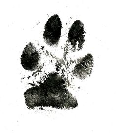 black and white paw print realistic - Google Search