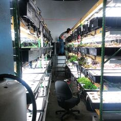 Brad #foilar_feed #hydroponic_lettuce #hydroponic_system #indoorfarm #growyourown #healthyliving #smartergarfens #nashville #farmers_market #farmtotable by smartergardens