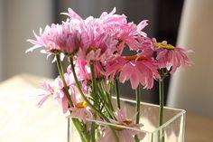 Růžové kopretiny (Robinson Pink) nadělají parádu a celkem dlouho vydrží ve váze.