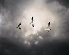Birds, por Marisa Portolese