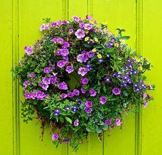 Living wreath on a neon green door. <3