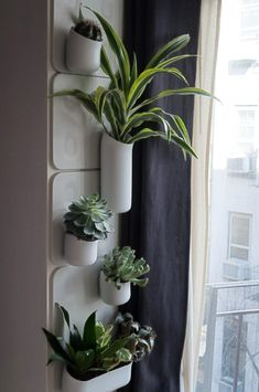 My small vertical garden Urbio! I really like it, I missing the big daddy, I couldn't find the plant! Great product.