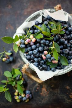 Want blueberry bushes in our yard! Reminds me of walking in woods with nana to pick wild blueberries In Natura, Wild Blueberries, Fruits And Vegetables, Fresh Fruit, Food Styling, Food Inspiration, Food Photography, Food And Drink, Yummy Food