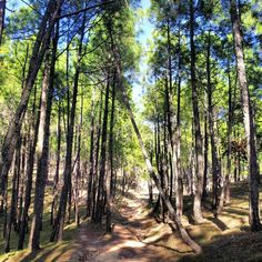 Wildlife Sanctuary, Binsar  Here are some staying options in Binsar - http://www.myguesthouse.com/hotels-in-binsar.html