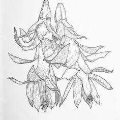 Still scribbling away 🥀  .  .  .  #illustration #illustratorsofinstagram #drawing #sketchbook #flowers #plants #nature #ink #unipinfineline #linework #scribble