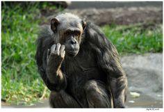 Der Denker...Tierpark Hellabrunn