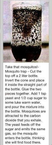 Take that mosquitoes!- Mosquito trap - Cut the top off a 2 liter bottle. Invert the cone and place it inside the straight part of the bottle. Glue the two pieces together. Add 1 tsp yeast and cup sugar to some luke warm water and pour the mixture int Mosquito Control, Pest Control, Diy Mosquito Trap, Bug Control, Mosquito Catcher, Insecticide, Mosquitos, Bees And Wasps, Fly Traps