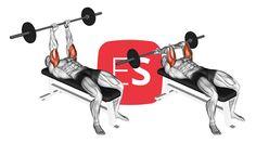 Εκτάσεις τρικεφάλων με μπάρα στον πάγκο (γαλλικές πιέσεις) Gym Equipment, Workout Equipment