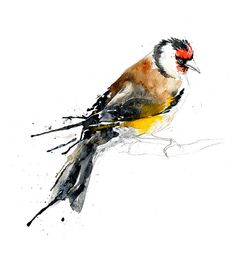 Goldfinch by Amy Holliday