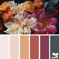 today's inspiration image for { flora palette } is by @traceybolton ... thank you, Tracey, for another gorgeous #SeedsColor photo share!