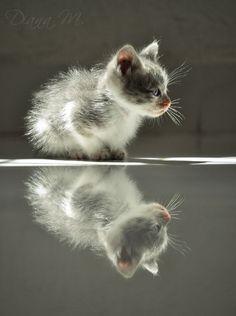 Gray reflection