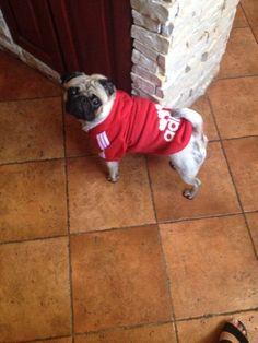 Bluza dla psa Adidog Dogs, Animals, Animais, Animales, Animaux, Pet Dogs, Doggies, Animal, Dog