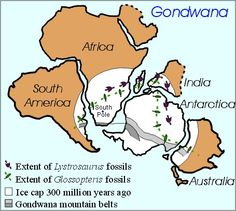 Image of Gondwana during ice age 300 MYA, a time when Gymnosperms became dominant plant group.