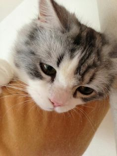 猫(^3^)/の画像 プリ画像