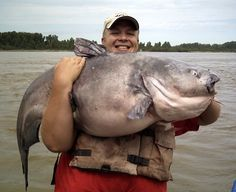 He likely weighed between lbs. People have told me that's the ugliest fish they've ever seen. Gone Fishing, Fishing Tips, Bass Fishing, River Monsters, Fishing World, Fishing Pictures, Big Fish, Freshwater Fish, Catfish