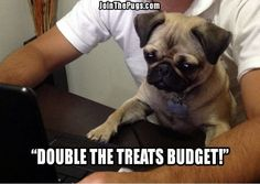 Pug Budgeting