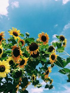 Coleman always bought her a sunflower on his way home from work My Flower, Beautiful Flowers, Plants Are Friends, Mellow Yellow, Pretty Pictures, Mother Nature, Planting Flowers, Scenery, Bloom