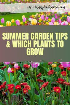 This post will guide you on what you should plant now in your summer garden and dealing with summer garden challenges like the heat. Check out this pin for more summer gardening tips! #gardening #gardeningtips #vegetablegardening #vegetablegarden #gardenideas #gardenplanning #summergardening Healthy Fruits And Vegetables, Organic Vegetables, Fruit Bushes, Fruit Trees, Container Gardening, Gardening Tips, Indoor Gardening, Flower Gardening, Vegetable Gardening