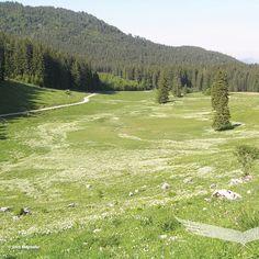 Rundwanderweg am Ebenforst: 🌾Wollgras, Alm und Wasserschwinde 💦  Am Rundwanderweg auf der Ebenforstalm erfährt man von geologischen Besonderheiten am Ebenforst und durchquert auf Holzstegen ein 8000 Jahre altes Hochmoor mit botanischen Kostbarkeiten wie z. B. Wollgras und Rundblatt-Sonnentau.  #nationalparkkalkalpen #tourderwoche  #entdecken #outdooradventures #findyourpark #nationalparks #neverstopexploring #wanderlust  #mountainlovers #berge #alm #erlebnisweg Nationalparks, Wanderlust, Concept Art, Mountains, Travel, Lighting Storm, Growing Plants, Kinds Of Birds, Morning Pics