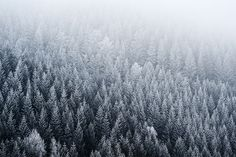 white frosted by stephan_amm, via Flickr