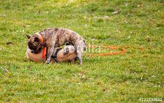 """Laden Sie das lizenzfreie Foto """"Spielhunde"""" von Photocreatief zum günstigen Preis auf Fotolia.com herunter. Stöbern Sie in unserer Bilddatenbank und finden Sie schnell das perfekte Stockfoto für Ihr Marketing-Projekt!"""