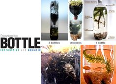 E is for Explore!: Ecosystem in a Bottle