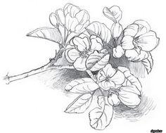 рисунок ветки яблони карандашом поэтапно