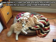 True Friendships   // funny pictures - funny photos - funny images - funny pics - funny quotes - #lol #humor #funnypictures