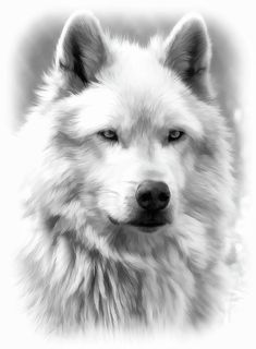 Grey wolf Portrait BW by Athena McKinzie  https://fineartamerica.com/featured/grey-wolf-portrait-bw-athena-mckinzie.html?newartwork=true