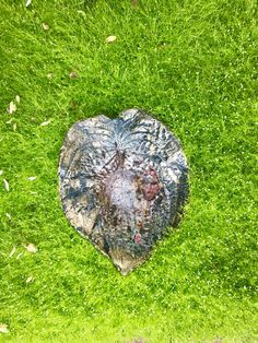 Hasta Leaf  Bird Bath Cast In Cement.