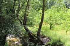 Φύση -Ποταμός- Κοιλάνι   Φύση- Κοιλάνι