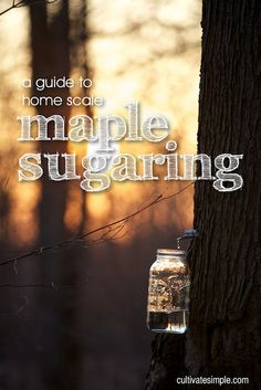 a guide to home scale maple sugaring.we plan on buying a house with maple trees :) Self Sufficient Homestead, Maple Syrup Recipes, Sugar Bush, Pot Mason, Sugaring, Pots, Home Canning, Maple Tree, Hobby Farms