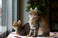 cat image: High Definition Backgrounds, 2048x1363 (443 kB)