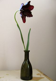 A black parrot tulip is a gorgeous feathered flower that's easy to grow. And gothy.