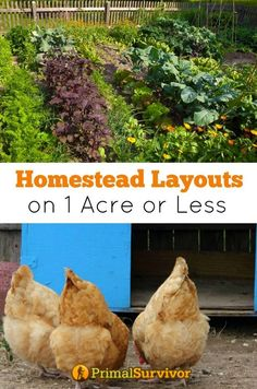 You dream of starting a homestead but don't think that you have enough land? Take a look at these homestead layout plans are 1 acre or under and help their owners achieve a huge degree of self-sufficiency and even some income.