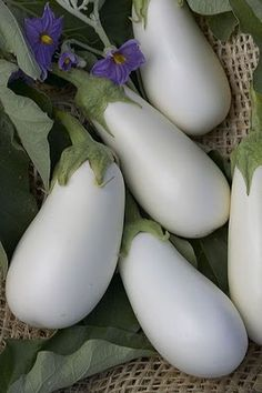 'Casper' white eggplant, one of the many veggies in our garden:) Going to roast them with garlic tonight. Exotic Food, Exotic Fruit, Tropical Fruits, Fruit And Veg, Fresh Fruit, Growing Eggplant, White Eggplant, Strange Fruit, Beautiful Fruits