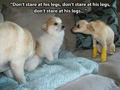 Don't stare at his legs....